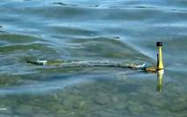 Robot lươn phát hiện ô nhiễm nước