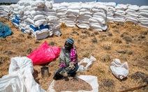 FAO quan ngại về vấn đề an ninh lương thực tại khu vực châu Phi