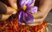 Nhụy hoa nghệ tây - hy vọng cho bệnh nhân Alzheimer