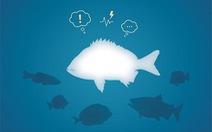 Phát hiện kinh ngạc về các trạng thái cảm xúc của loài cá