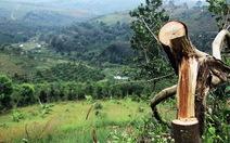 Miễn nhiệm chủ tịch xã để mất 48,6ha rừng