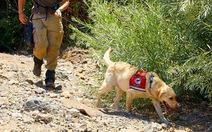 Ngộ nghĩnh 'chó đặc nhiệm' chuyên săn lùng... kiến