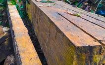 Làm rõ trách nhiệm hạt kiểm lâm, ban quản lý rừng phòng hộ