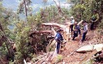 Khởi tố 6 bị can cưa trộm 13 cây pơmu ở Nghệ An
