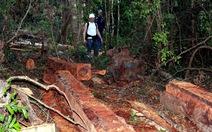 Chuyển hồ sơ bãi cưa xẻ gỗ trong rừng cho công an