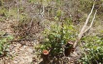 Xử lý tin đồn đưa rừng ra khỏi quy hoạch để lấn chiếm đất
