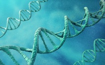 Phát hiện gene liên quan đến đồng tính