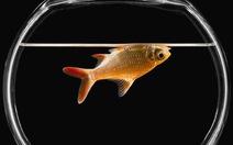 Vì sao cá chết thường nằm ngửa?