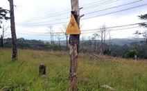 Bắt tạm giam chủ tịch xã 'bán' rừng cho doanh nghiệp