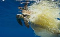 Báo động rác thải nhựa 'tận diệt' rùa biển