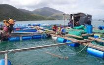 Tảo nở hoa gây chết cá hàng loạt ở vịnh Vân Phong