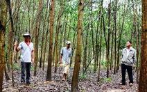 Cả xã làm 'rừng cây khuyến học'