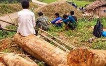 Kỷ luật khiển trách kiểm lâm để mất rừng ở Lào Cai, Yên Bái