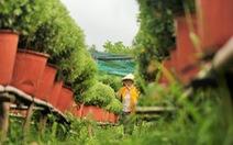 Làng hoa Cái Mơn 'run rẩy' sau bão Tembin