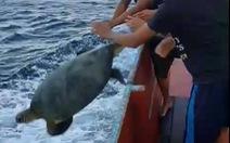 Thả rùa biển hơn 100kg về đại dương
