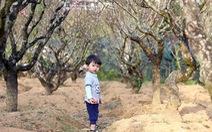 Chuyện Đà Lạt không phải ai cũng biết - Kỳ 6: Thung lũng hoa đào