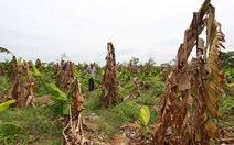 Khởi tố giám đốc hủy hoại 49ha rừng ở Đắk Lắk