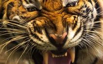 Đi du lịch phải cẩn thận trước những loài vật đáng sợ này