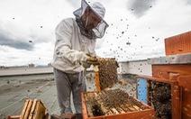 Nơi nào được gọi là 'Thủ đô của ong'?