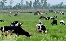 TP.HCM Ban hành danh mục nhóm sản phẩm chủ lực của ngành nông nghiệp