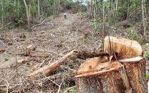 Giám định thiệt hại vụ lợi dụng chủ trương tận thu để 'phá rừng'