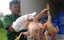 Chim cút lậu đi Tiền Giang, bị bắt ở Sài Gòn