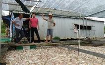 Người nuôi cá khóc ròng, vớt cá chết bán 1000 -2000 đồng/kg