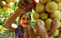 Về Tiên Phước ăn trái bòn bon