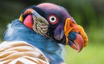 Kỳ dị 10 loài chim như người ngoài hành tinh