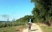 Vành đai tre chống lũ giữ đất bên sông Thu Bồn