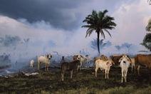 Tàn sát quá nửa động vật, con người đang giết tương lai của mình