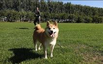 Dân mạng thích thú với chú chó được tòa án bán đấu giá