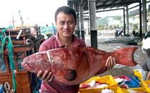 Đánh cá xa bờ: mưu sinh trên đầu ngọn sóng