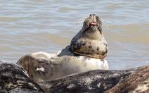 Rác nhựa bủa vây, đại dương kêu cứu