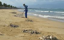 Vụ cá chết trắng biển Đà Nẵng: đề nghị giám sát việc dùng mìn đánh cá