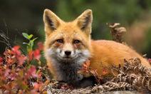 Châu Âu hỗ trợ 100% thiệt hại cho nông dân bị động vật hoang dã phá hoại
