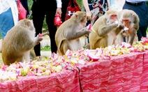 Độc lạ tiệc buffet dành cho khỉ