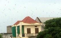 'Thảm họa' ở làng nuôi chim yến