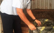 Phát hiện 28 đuôi voi giấu trong 3 container gỗ