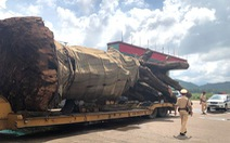 Tạm giữ xe chở cây 'siêu khủng' từ Đắk Lắk ra Ninh Bình