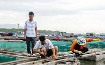Hai tàu cá của Bà Rịa - Vũng Tàu mất liên lạc trên biển