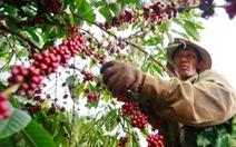 Nhiều tổ chức, doanh nghiệp quốc tế dự 'Ngày cà phê Việt Nam lần thứ hai'
