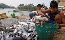 Campuchia muốn xây hồ giữ lại cá sông Mekong cho mình