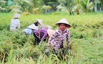 Nông dân Tiền Giang hối hả bơm nước cứu 10.000ha lúa