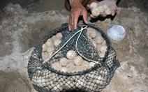Vẫn chỉ xử người vận chuyển 116 trứng vích, không có người lấy trộm
