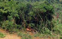 2 hecta rừng tự nhiên 'biến mất' trong báo cáo gửi UBND tỉnh