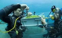 Trang trại trồng rau dưới biển đầu tiên trên thế giới