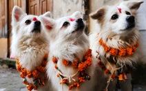 Kukur Tihar - lễ hội tuyên dương những chú chó tại Nepal