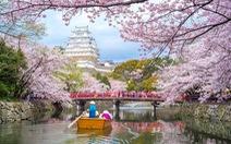 """Đến Nhật ngắm hoa Anh đào bằng """"chuyên cơ"""""""