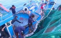 Tận diệt hải sản trong khu bảo tồn biển Lý Sơn
